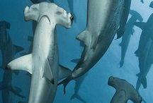 onderwaterwereld / over de onderwaterwereld.