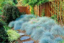 Green Garden / Garden