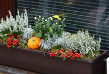 podzim truhlik