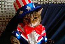 Patriotic Cats / Celebrating the independence of our nation!