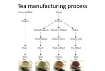 Tea Manufacturing Process