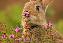 Animals & Flowers