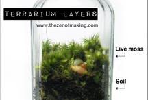 plant education