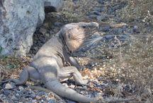 """La Gomera / Isla perteneciente a la provincia de Santa Cruz de Tenerife. En su haber tiene 2 Patrimonios de la Humanidad: El Silbo Gomero (lenguaje silbado) y el Parque Nacional de Garajonay. Por otro lado, se puede disfrutar de la formación de columnas basálticas en un acantilado conocidas como """"los órganos"""", de la Playa de Santiago y del Parque Natural de Valle Gran Rey entre otros."""