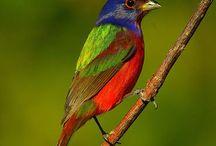Birds! / by Sharlene Linder