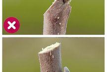 Baum/Pflanzenschnitt