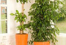 Soho - Plant Collection