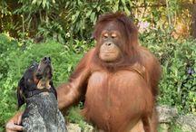video zvířata