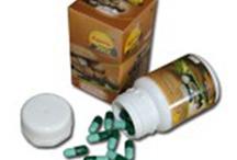 Obat Herbal Kanker