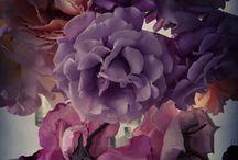 Flowers~Nature~Animals