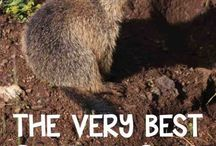 groundhogs day lesson