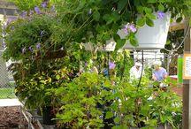 2016 Master Gardener Plant Sale