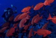 October 31 to November 07, 2013 Dive Safari Trip - MY Blue Seas / On board MY Blue Seas. October 31 to November 7, 2013. RedSea, Egypt. Visit www.blueplanet-liveaboards.com.