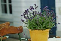 Plantas e flores para apartamento