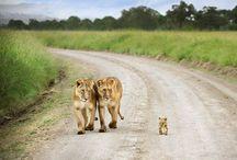 A love affair with Africa... / A love affair with Africa turistacidental.com