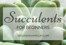 Guide to Succulents