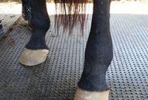 Horses &practical stuff