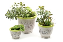 Chartreuse Succulent Garden Collection / For more information on any of our pre-mades, please call 404-351-0000 or send us an email at order@heeney.com. / by Heeney Company