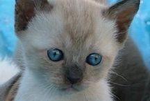 I want one! Cutest kittens eva