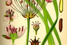 Ботаник арт