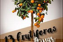 Frutíferas em vasos