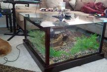 Amazing Tank Setups
