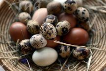 Eggs excellent