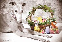 Greyhounds around the world / Greyhounds<3