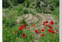 Jardin extraordinaire - extraordinary garden