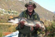 pesci pescati nel lago di Endine e gaiano
