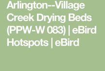 Birding - DFW Area