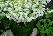 Giardinaggio / Fiori e piante preferite