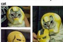 morsom katt