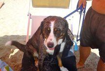 Vita da cani, si fa per dire: a San Cataldo il primo lido salentino per amici a 4 zampe
