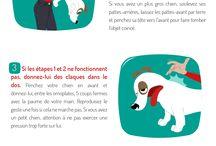 Love Animals / Des idées pour les animaux   Webzine : www.nadinebachjockers.fr Fbk : https://www.facebook.com/nadinebjockers.auteur/nj.org Instagram : https://www.instagram.com/nadinebachjockers.author/