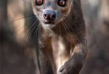 Tropical fossa insp