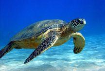 Sea Turtles / I love sea turtles! / by Emi Kat