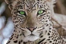 Animales / Bellísimos animales