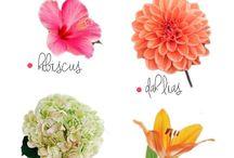 flori din august