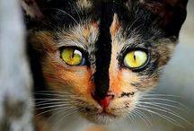 cat stuff / cats