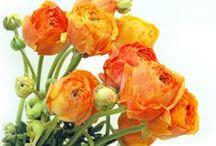 Blossoms / by Michelle L. LeBlanc