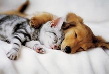 Too Cute Animals