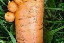 Groente/Vegetables