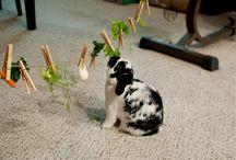 diy rabbit stuff