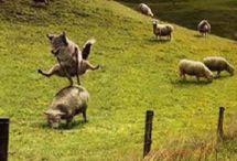 Gøy på landet