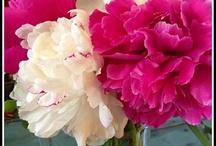 Centerpieces/Flower Arrangements / by Heureux Pour Tourjours