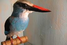 The Art of Taxidermy / Living with the beauty of nature forever / by Tracy C Stillman