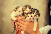 Kittens!!! / Cute and funny kittens.