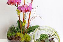 Akvaryumda çiçekk