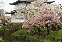 Japan / by Marsha East